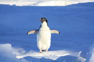Ubuntu Server 16 LTS版のインストール Linuxシェア NO.1のディストリビューションを使ってみる